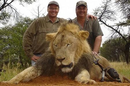 Gringo provoca escándalo por matar a león 'famoso'