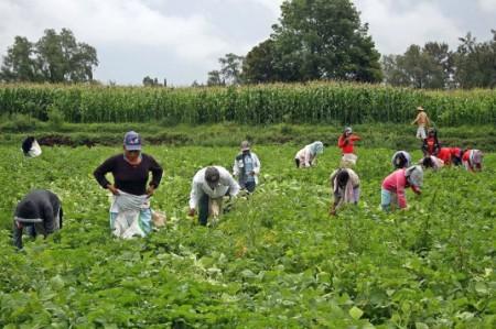 CNDH solicita protección a niños jornaleros rescatados