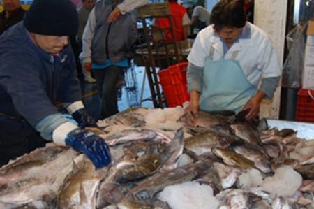 Pescados del mar y granjas proveen los mismos nutrientes