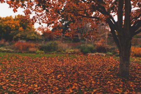 El otoño iniciará el próximo 23 de septiembre