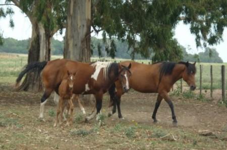 Robo de caballos es un asunto viejo en la frontera