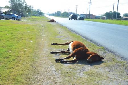 Dejan abandonados caballo y mula muertos por la Ribereña