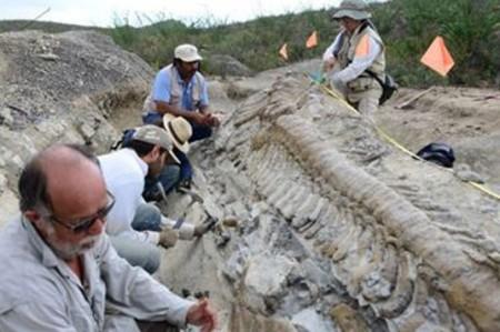 Paleontólogos calculan que los dinosaurios evolucionaron rápidamente