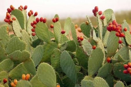 Politécnicos optimizan elaboración de impermeabilizante natural
