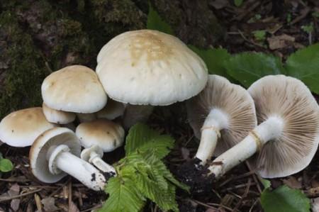 Crean semillas de hongos comestibles para cultivarse en el hogar