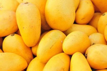 Todo lo que debes saber del mango