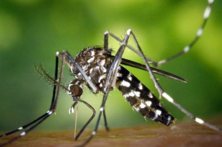 Alertan sobre posible transmisión sexual del virus del Zika