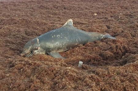 Aparece delfín muerto en playa de Acapulco
