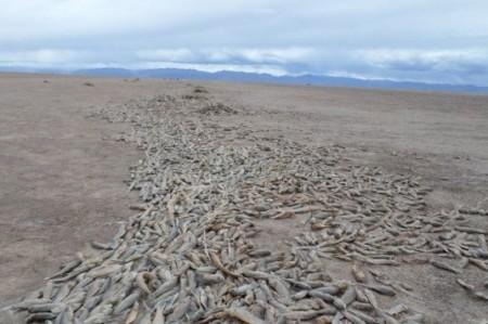 Confirman 'evaporación completa' del segundo mayor lago de Bolivia