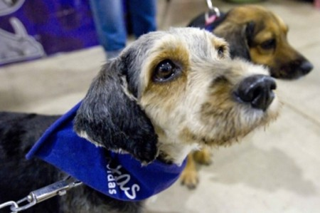 Asambleísta propone creación de instituto de protección animal
