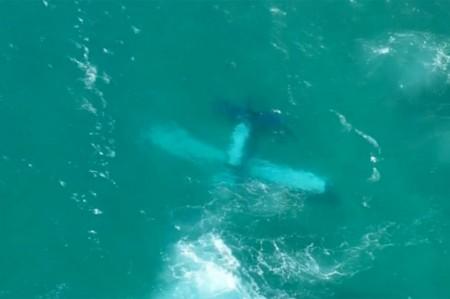 Avioneta cae al mar y rescatan a tres personas en sur de Florida
