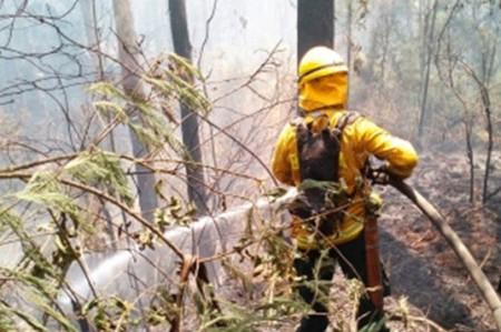 Brigadistas combaten incendio forestal en Tamaulipas