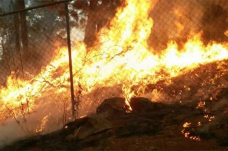 Incendios en Uruapan afectan 250 hectáreas