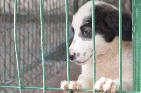 Invitan a vacunar a perros y gatos en Reynosa