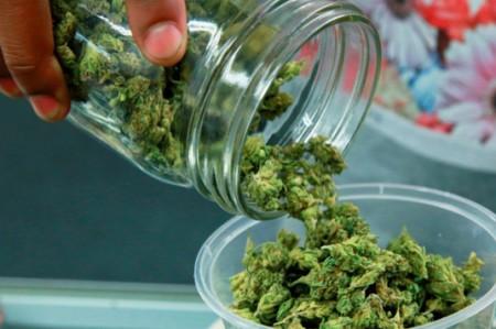 Ssa agilizará trámites para uso medicinal de la cannabis