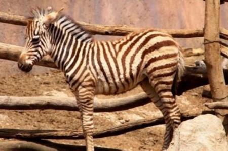 Animales de zoológico enfermos