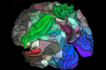 Actualizan mapa del cerebro humano