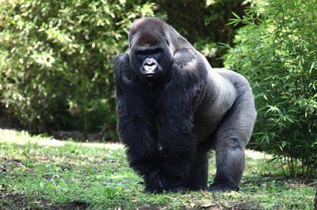 Suspenden a director de zoológicos tras muerte de Bantú