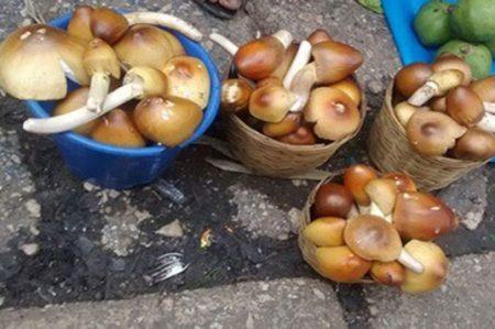 Mueren 3 indígenas en Chiapas por comer hongos silvestres
