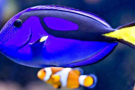 ¿Qué tipo de pez es 'Dory'?