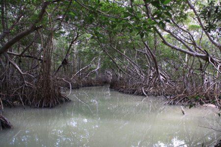 Gobernador de Colima exige reparar derrame en manglar