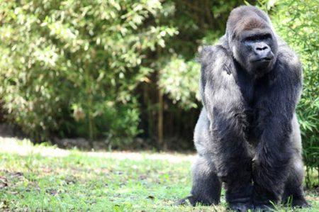 Emite Profepa recomendaciones a estados por zoológicos