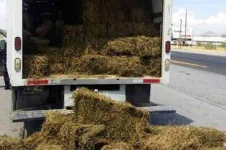 Decomisan 2.1 toneladas de marihuana en Coahuila