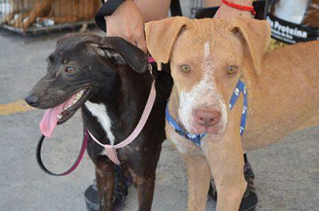 Gran respuesta ante Campaña de Esterlización para perros y gatos