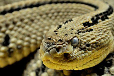 Serpientes atemorizan a paseantes en Parque Cultural