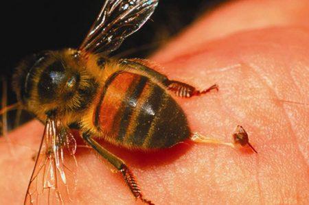 Hombre ebrio muere al tragarse una abeja por descuido