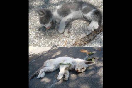 Denuncian maltrato a gatos en Panteón Francés