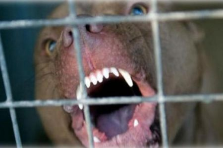 Niño está grave por ataque de pitbull