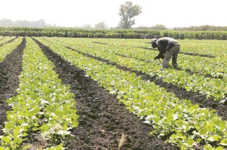 Organizaciones campesinas demandan dejar fuera agricultura de TLCAN