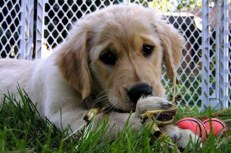 Tips para el cuidado de tu cachorro