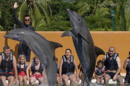 PRD propone cerrar delfinarios por maltrato animal