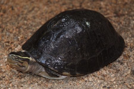 Profepa rescata ejemplares de vida silvestre en Querétaro