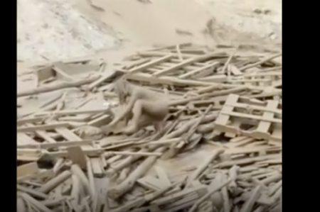 ¡Impactante! Mujer emerge de avalancha de lodo en Perú (VIDEO)