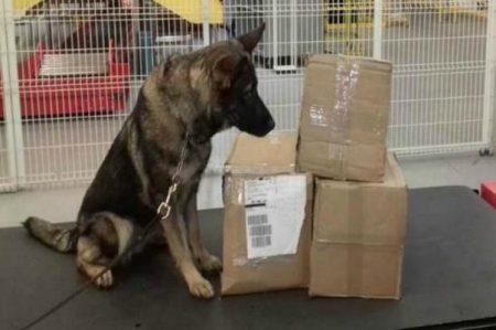 Detectan en Querétaro más de 10 kg de droga sintética en macetas
