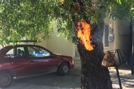 Viejo árbol en llamas representa un riesgo; lo apagan a cubetazos