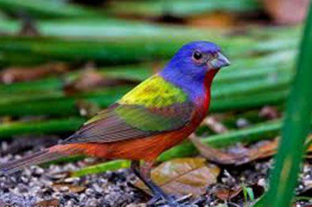Aseguran a 490 aves silvestres en Nayarit