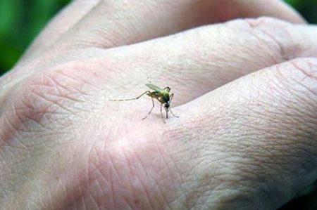 Refuerzan jornada contra dengue, zika y chikungunya