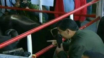 Maduro pide apoyo a vacas y causa polémica en Venezuela