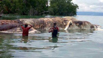 Restos de enorme criatura marina causan alarma en Indonesia