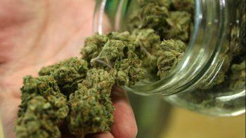 Avanza en la Corte uso lúdico de la marihuana