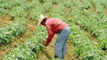 Erradicación de hoja de coca busca reconstruir tejido social en Colombia