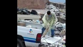 Indigna en redes manejo de animales muertos en Chihuahua