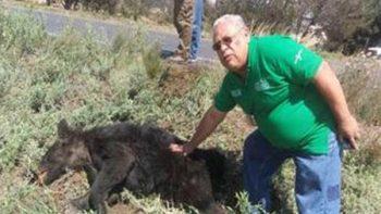 Procuraduría ambiental atiende muerte de oso negro en Saltillo