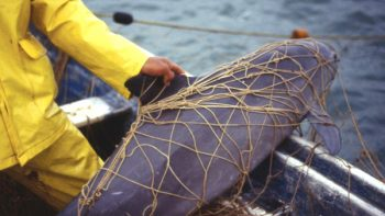 Marina retira 134 kms. de redes ilegales en Alto Golfo de California