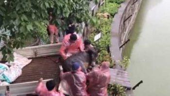 Empleados de zoológico en China alimentan a tigres con un burro vivo