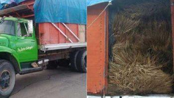 Profepa asegura 10 mil hojas de Palma de Llano